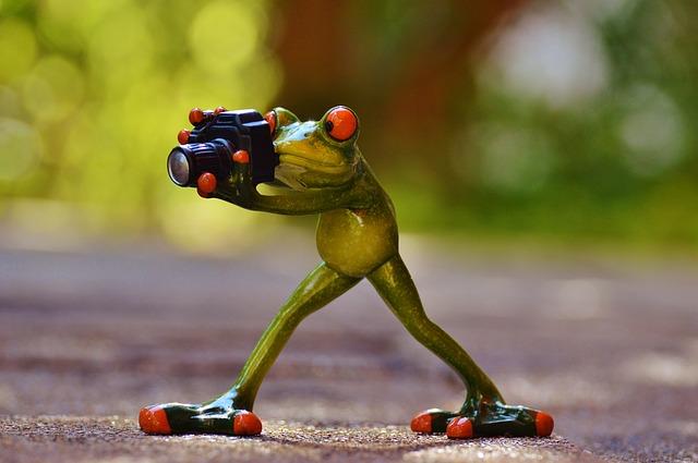 fotografující žába